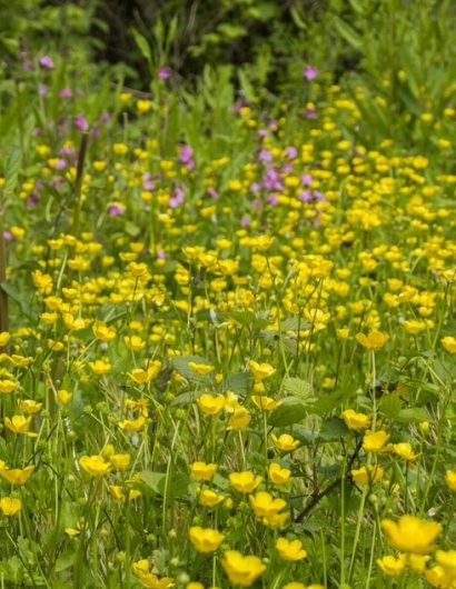 Biodiversity - Flowers at owl valley