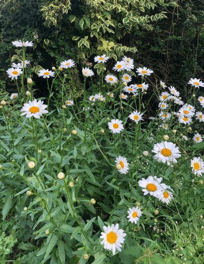 Biodiversity at Owl Valley Glamping